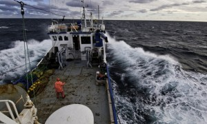 A trawler plies the North Sea for Coalfish. Fisheries for this species and around 150 others are controlled by the EU.