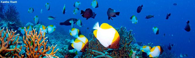 Global Ocean Legacy Coral Sea