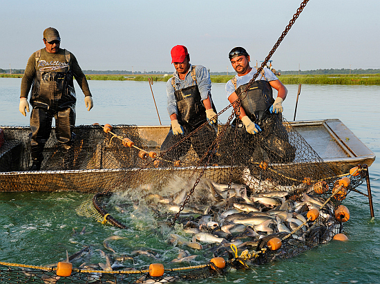 Picture of a catfish farm in Mississippi
