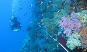 Reef life survey Photograph: Jemima Stuart-Smith