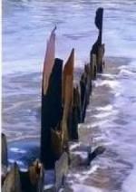 Beach hazards