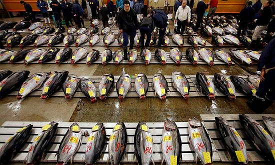 Wholesalers survey fresh tuna at the Tsukiji fish market in Tokyo before an auction. Photograph: Toru Hanai/Reuters