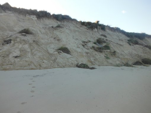 Picture showinf the fifty metre cut into the dune face and 3 metre loss of beach sand cover between Hemsby Gap and Winterton