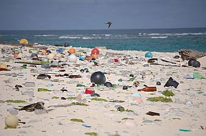 Shore thing: large amounts of plastic litter are polluting our oceans and beaches