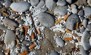 Cigarette butts ends left in the sand on a beach