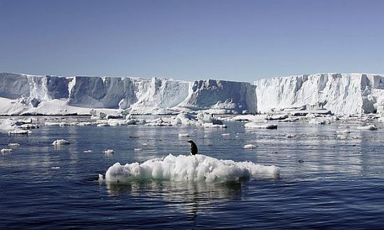 Antarctica is home to most of the world's penguins and whales. The Commission for the Conservation of Antarctic Marine Living Resources, which has been meeting annually since 2011, commenced two weeks of talks on Monday 17th October to discuss creating marine reserves in the Antarctic. Photograph: Reuters