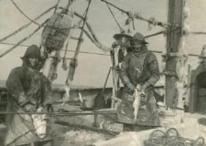 On board the steam trawler Grosbeak in February, 1947